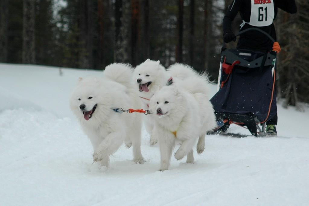 Leevi, Filja ja Elea (c) Merja Ojanperä