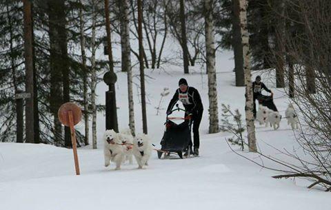 Lauantain maaliintulo (c) Minna Leskinen