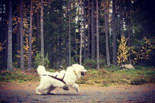 Velmu2019-Katja-Koivumäki